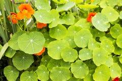 Grüne Blätter und Blumen Stockbilder