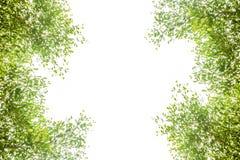 Grüne Blätter und Niederlassungshintergrund mit Kopienraumtext stockbild