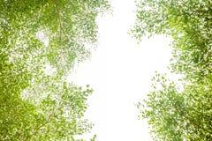 Grüne Blätter und Niederlassungshintergrund mit Kopienraumtext stockfoto