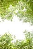 Grüne Blätter und Niederlassungshintergrund mit Kopienraumtext lizenzfreie stockfotos