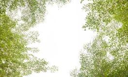 Grüne Blätter und Niederlassungshintergrund mit Kopienraumtext stockfotografie