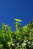 Grüne Blätter unter blauem Himmel lizenzfreies stockfoto