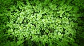 Grüne Blüten Stockfotografie