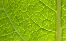 Grüne Blatt-Beschaffenheit Lizenzfreie Stockfotografie