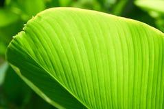 Grüne Blattanlage Stockfoto