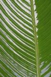 Grüne Blattanlagen Stockfotografie