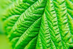 Grüne Blattanlagen schließen oben Makro Strukturierter Hintergrund Lizenzfreies Stockfoto