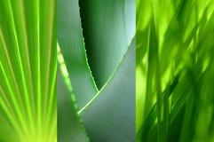 Grüne Blattansammlung Stockfotografie
