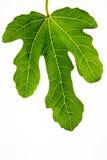 Grüne Blattbeschaffenheit stockbild