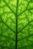 Grüne Blattbeschaffenheit Stockbilder