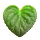 Grüne Blattherzform. lizenzfreie stockbilder