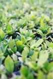 Grüne Blattnahaufnahme im Moring Stockfotografie