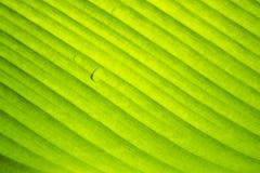 Grüne Blattrollen Abstraktion Hintergrund Stockbild