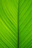 Grüne Blattrollen Abstraktion Hintergrund Stockbilder