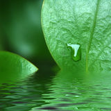Grüne Blattwasserreflexion Lizenzfreie Stockfotos
