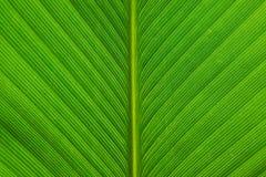 Grüne Blattzeile Lizenzfreies Stockfoto