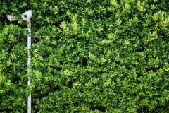 Grüne Blattzusammenfassungsbeschaffenheit mit Kamera lizenzfreie stockfotografie