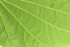 Grüne Blattzusammenfassungshintergründe Stockbilder