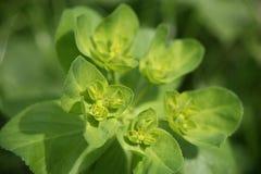 Grüne Blume Stockbild