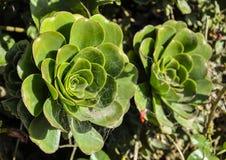 Grüne Blume Stockfotografie