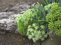 Grüne Blume Stockfotos