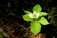 Grüne Blume Lizenzfreie Stockfotografie