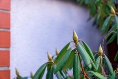 Grüne Blumen blühen nicht Hintergrund für eine Beschreibung lizenzfreie stockbilder