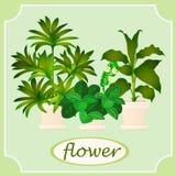 Grüne Blumen in den Töpfen Bild mit Raum für Text lizenzfreie abbildung