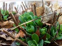 Grüne Blumen am Frühling Lizenzfreie Stockfotos