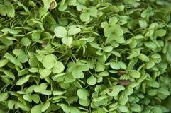 Grüne Blumen - nahes hohes Lizenzfreie Stockbilder