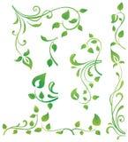 Grüne Blumenelemente Stockbilder
