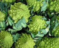 Grüne Blumenkohle mit ihren Blättern sehr viele Fleischmehlklöße Stockbilder