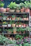 Grüne Blumentöpfe Stockfotos