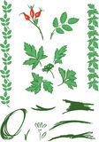 Grüne Blumenverzierung Stockfoto