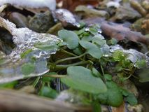 Grüne Bodendecke Stockbild