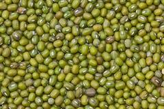 Grüne Bohne Stockfoto