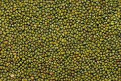 Grüne Bohnen Lizenzfreie Stockfotografie