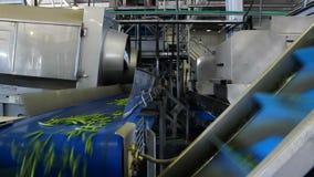 Grüne Bohnen bei der Verarbeitung stock video