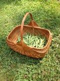 Grüne Bohnen im Korb stockbild