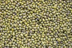 Grüne Bohnen, Mungobohnen Lizenzfreies Stockfoto