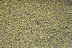 Grüne Bohnen, Mungobohnen Stockfoto
