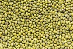 Grüne Bohnen, Mungobohnen Lizenzfreie Stockfotografie