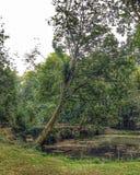 Grüne Brücke Stockbild