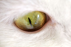 Grüne Cat Eye Macro Lizenzfreie Stockbilder