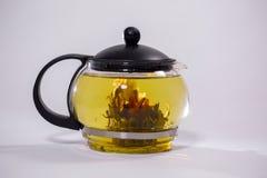 Grüne chinesische Teeblumenknospe, die in der Glasteekanne blüht Auf weißem Hintergrund Stockfotos