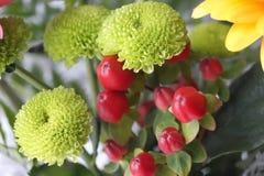 Grüne Chrysantheme Stockfoto