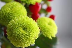 Grüne Chrysantheme Lizenzfreie Stockfotografie