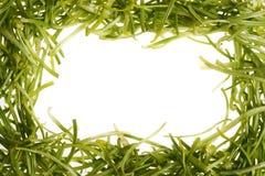 Grüne Chrysanthemeblumenblätter Lizenzfreie Stockfotos
