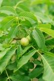 Grüne dünne Palmblattanlage, die in den wilden, tropischen Forstpflanzen, immergrüne Rebabstrakte Farbe wächst lizenzfreie stockfotografie