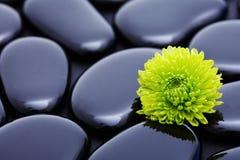 Grüne der Blume Lebensdauer noch Stockfoto